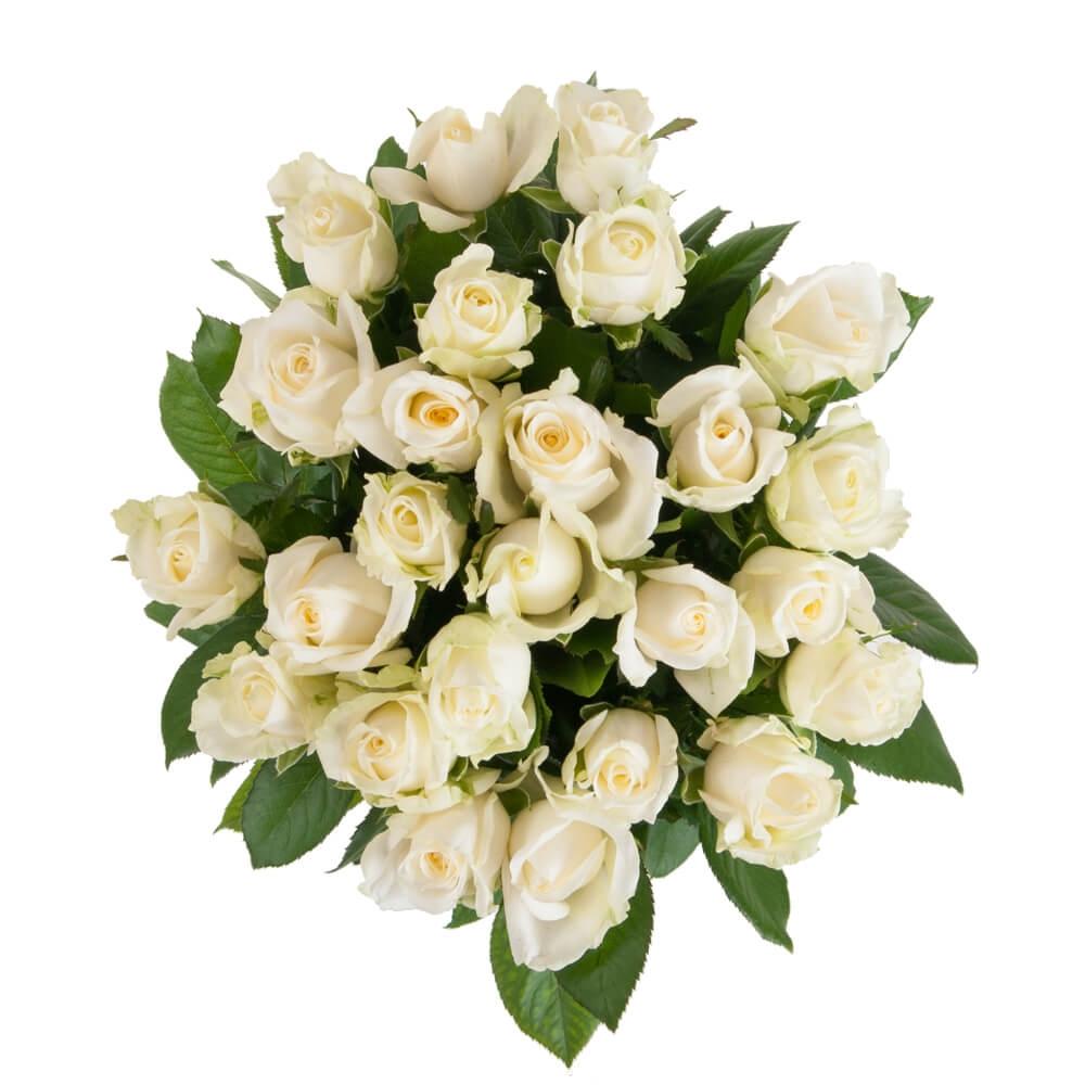 российская роза 25 штук